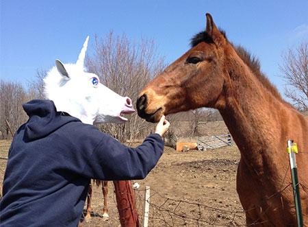 Unicorn_horse